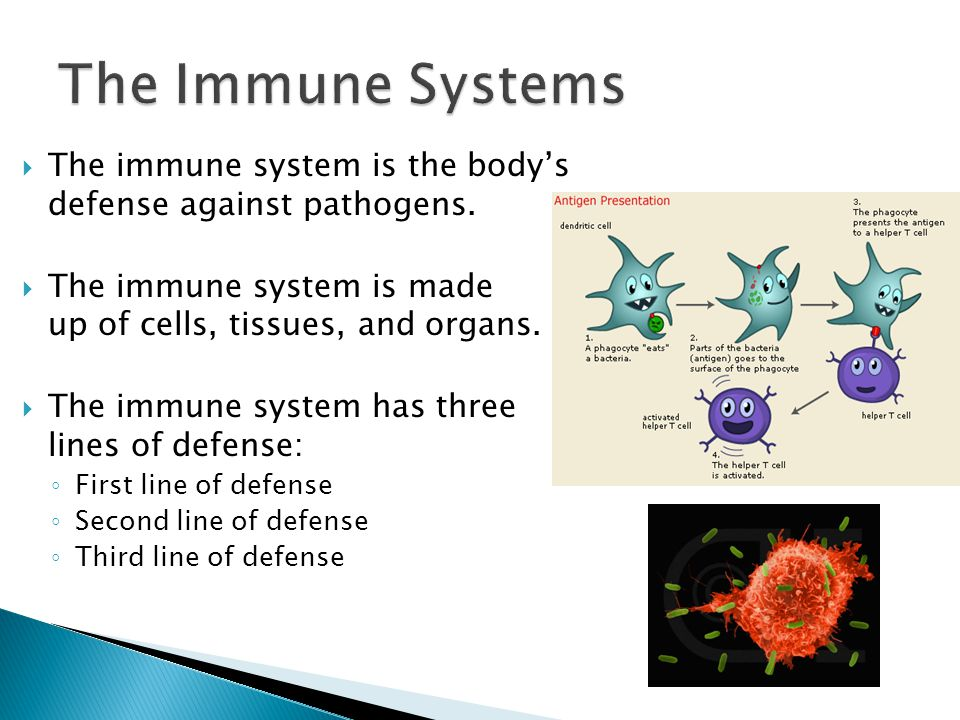  The immune system is the body's defense against pathogens.  The immune system is made up of cells, tissues, and organs.  The immune system has thr