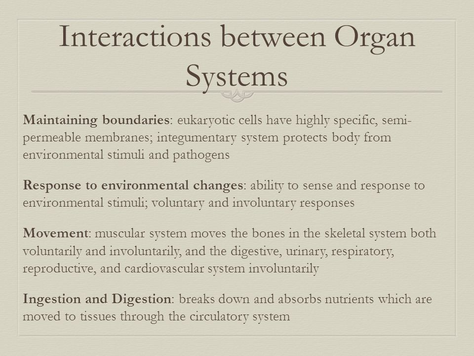 Interactions between Organ Systems Maintaining boundaries: eukaryotic cells have highly specific, semi- permeable membranes; integumentary system prot