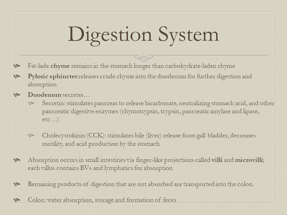 Digestion System  Fat-lade chyme remains in the stomach longer than carbohydrate-laden chyme  Pyloric sphincter releases crude chyme into the duoden