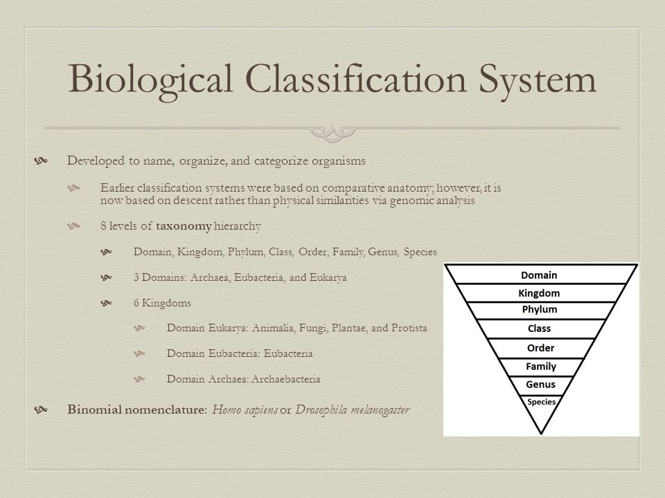 Biological Classification System  Developed to name, organize, and categorize organisms  Earlier classification systems were based on comparative an