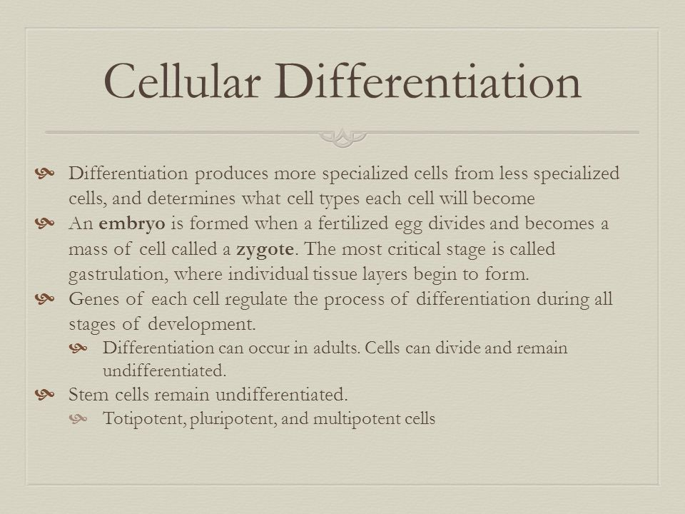 Cellular Differentiation  Differentiation produces more specialized cells from less specialized cells, and determines what cell types each cell will