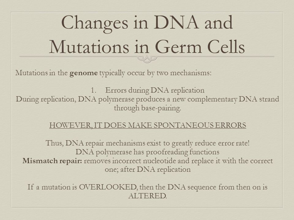 Changes in DNA and Mutations in Germ Cells Mutations in the genome typically occur by two mechanisms: 1.Errors during DNA replication During replicati