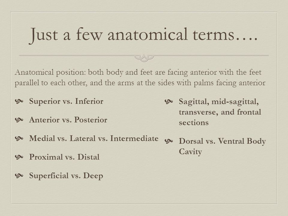 Just a few anatomical terms…. Anatomical position: both body and feet are facing anterior with the feet parallel to each other, and the arms at the si