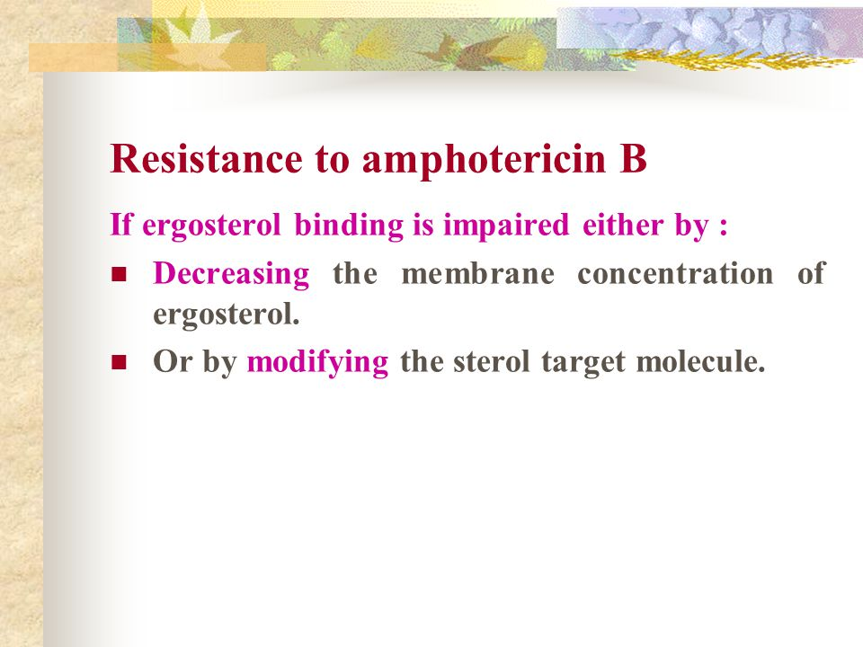 Resistance to amphotericin B If ergosterol binding is impaired either by : Decreasing the membrane concentration of ergosterol. Or by modifying the st