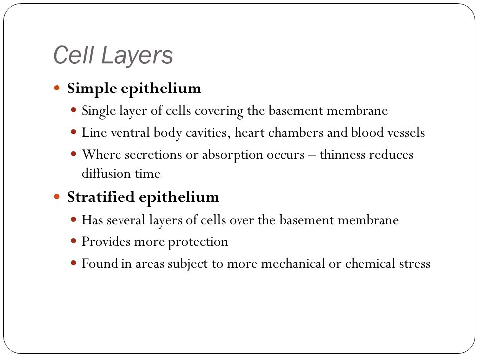 Cell Layers Simple epithelium Single layer of cells covering the basement membrane Line ventral body cavities, heart chambers and blood vessels Where