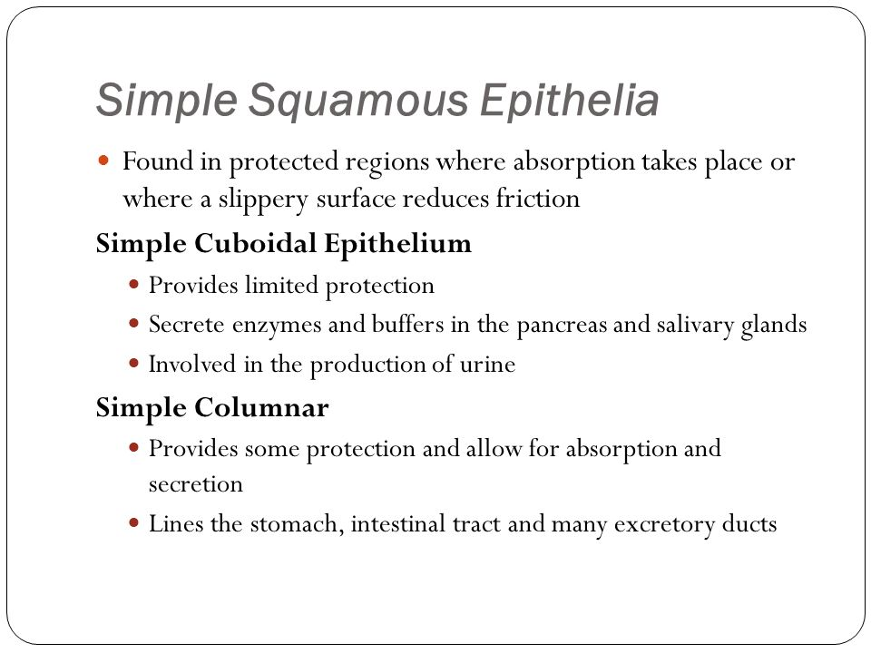 Simple Squamous Epithelia Found in protected regions where absorption takes place or where a slippery surface reduces friction Simple Cuboidal Epithel
