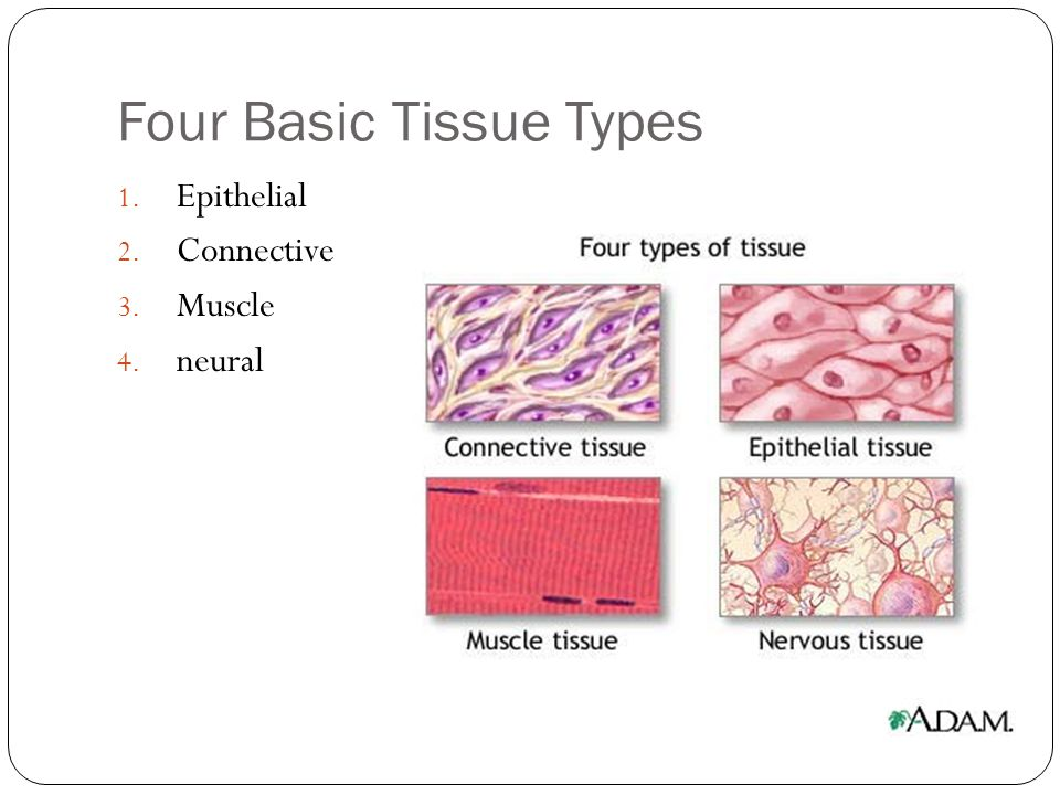 Classifying Connective Tissues 1.