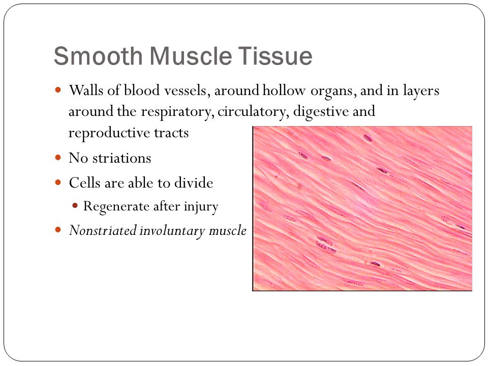 Smooth Muscle Tissue Walls of blood vessels, around hollow organs, and in layers around the respiratory, circulatory, digestive and reproductive tract