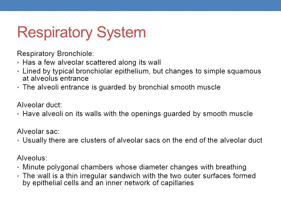 Respiratory System Respiratory Bronchiole: Has a few alveolar scattered along its wall Lined by typical bronchiolar epithelium, but changes to simple