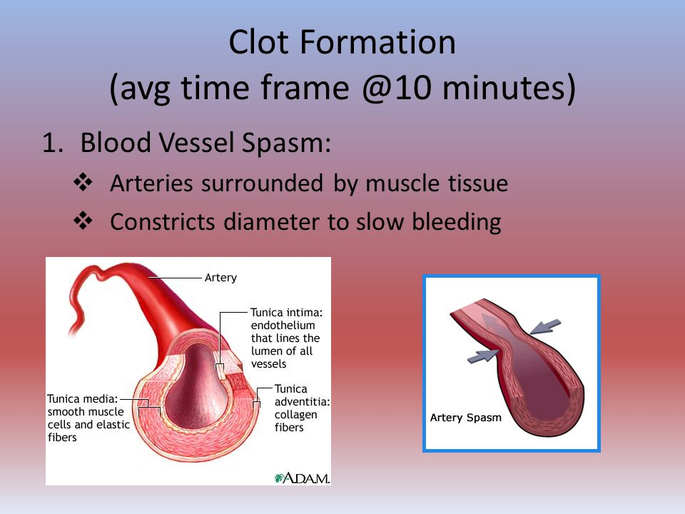 Clot Formation (avg time frame @10 minutes) 1.Blood Vessel Spasm:  Arteries surrounded by muscle tissue  Constricts diameter to slow bleeding