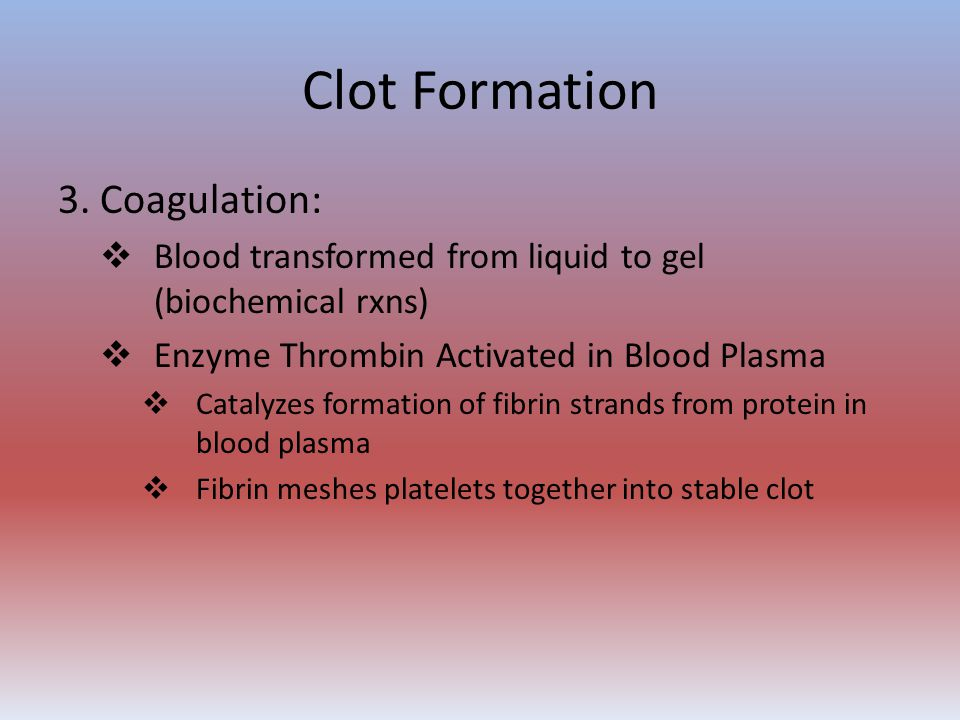 Clot Formation 3. Coagulation:  Blood transformed from liquid to gel (biochemical rxns)  Enzyme Thrombin Activated in Blood Plasma  Catalyzes forma