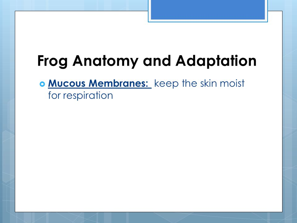 Frog Anatomy and Adaptation  Mucous Membranes: keep the skin moist for respiration