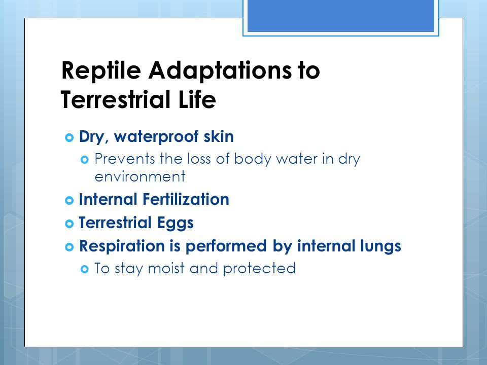 Reptile Adaptations to Terrestrial Life  Dry, waterproof skin  Prevents the loss of body water in dry environment  Internal Fertilization  Terrest
