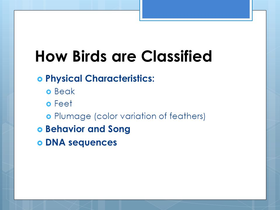 How Birds are Classified  Physical Characteristics:  Beak  Feet  Plumage (color variation of feathers)  Behavior and Song  DNA sequences