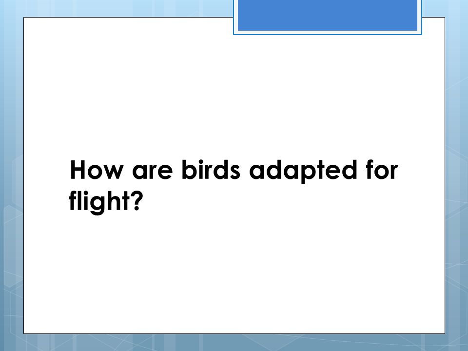 How are birds adapted for flight?