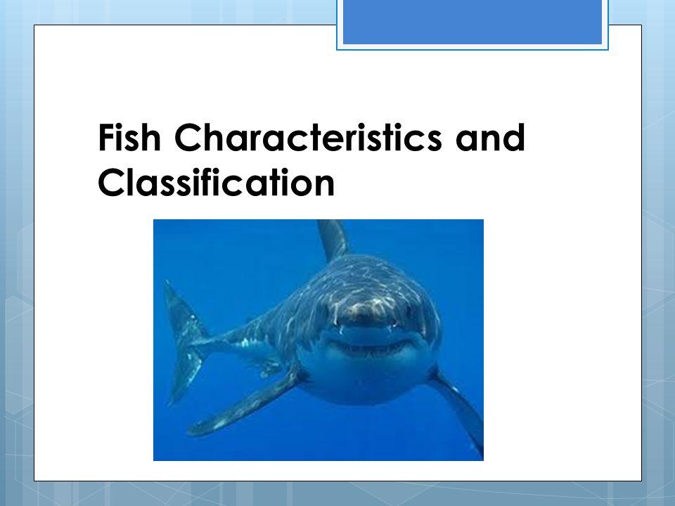 3 Classes of Fish: 1.