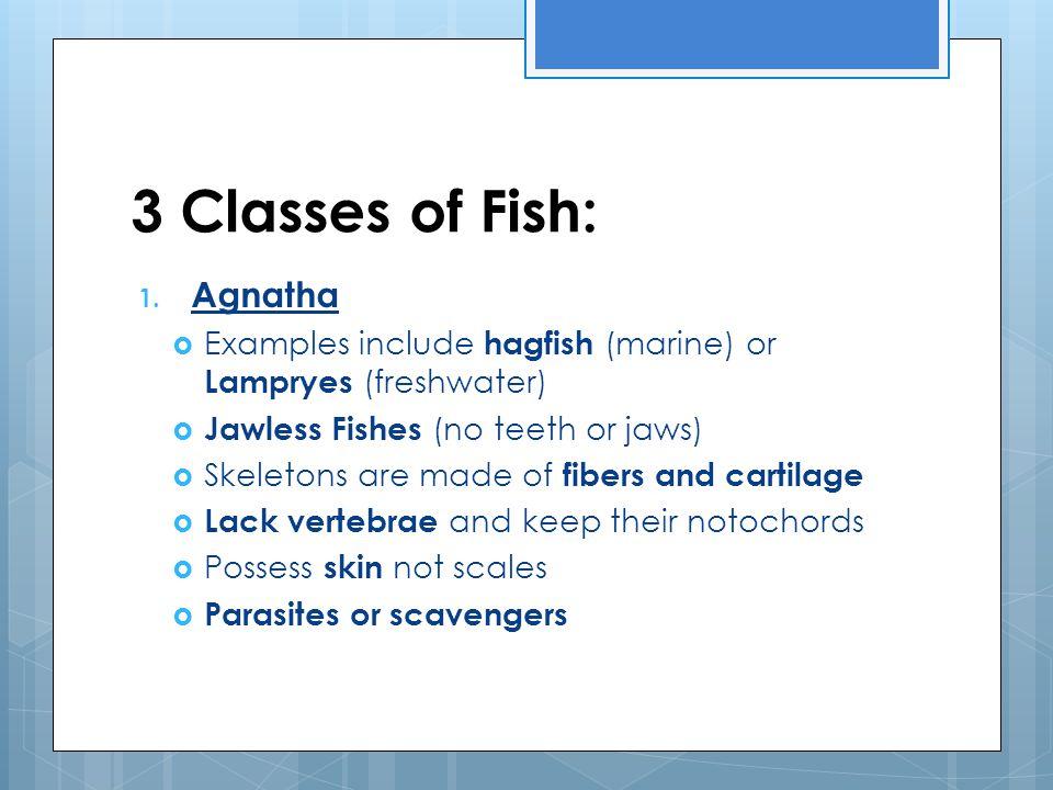 2 Types of Agnatha A.