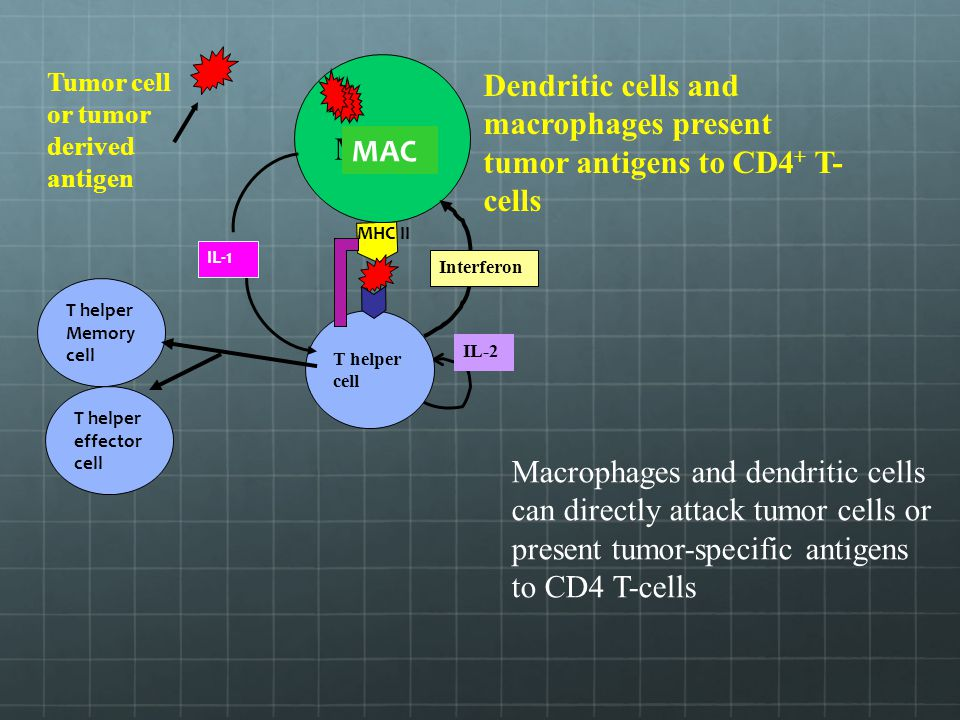 MAC MHC II MAC T helper cell IL-2 T helper Memory cell T helper effector cell IL-1 Interferon Macrophages and dendritic cells can directly attack tumo