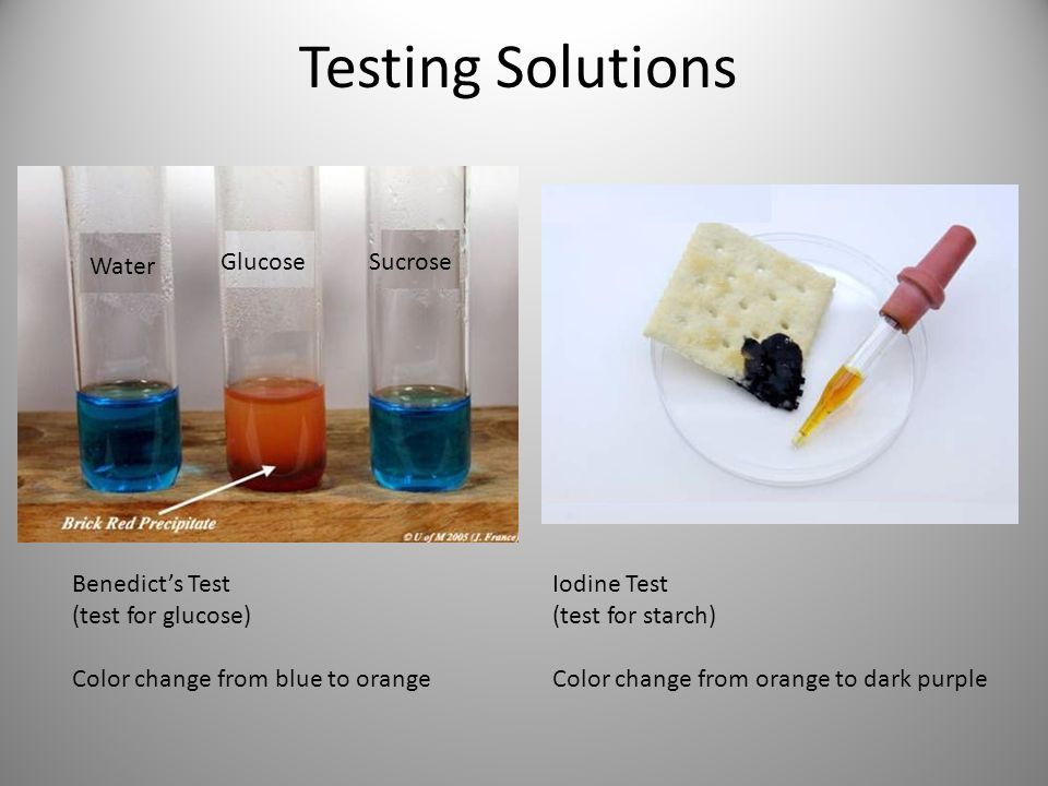 Testing Solutions Water GlucoseSucrose Benedict's Test (test for glucose) Color change from blue to orange Iodine Test (test for starch) Color change from orange to dark purple