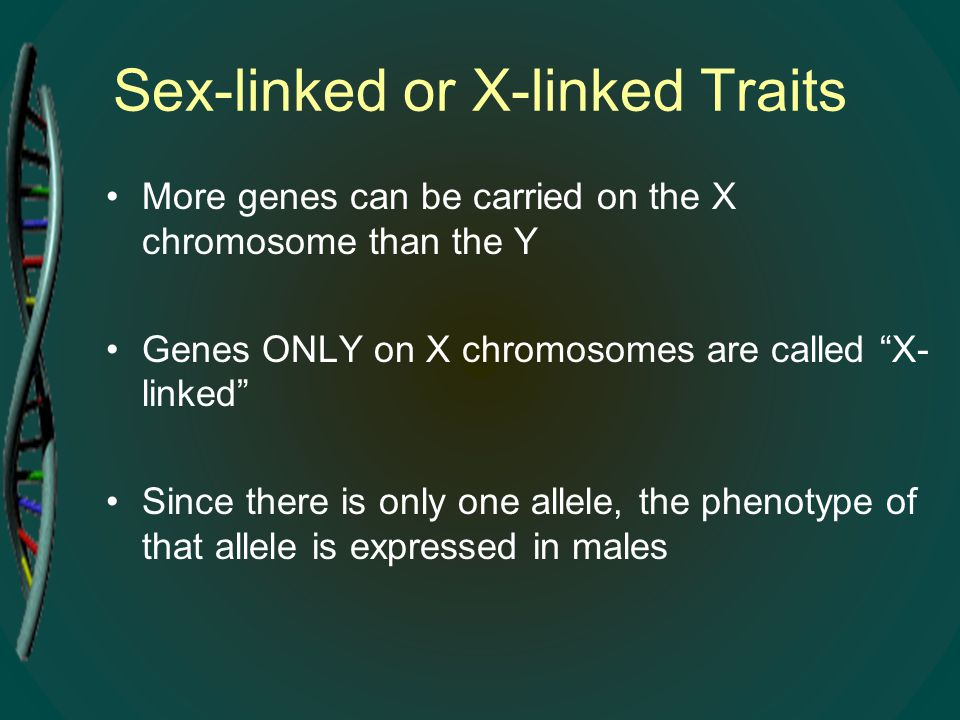 """Sex-linked or X-linked Traits More genes can be carried on the X chromosome than the Y Genes ONLY on X chromosomes are called """"X- linked"""" Since there"""