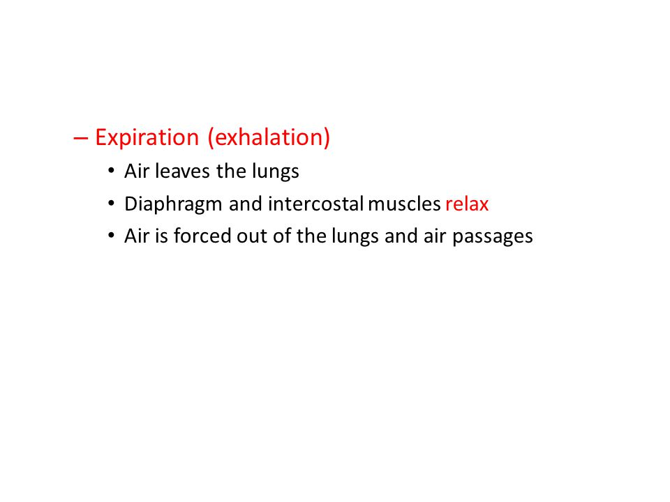 – Expiration (exhalation) Air leaves the lungs Diaphragm and intercostal muscles relax Air is forced out of the lungs and air passages