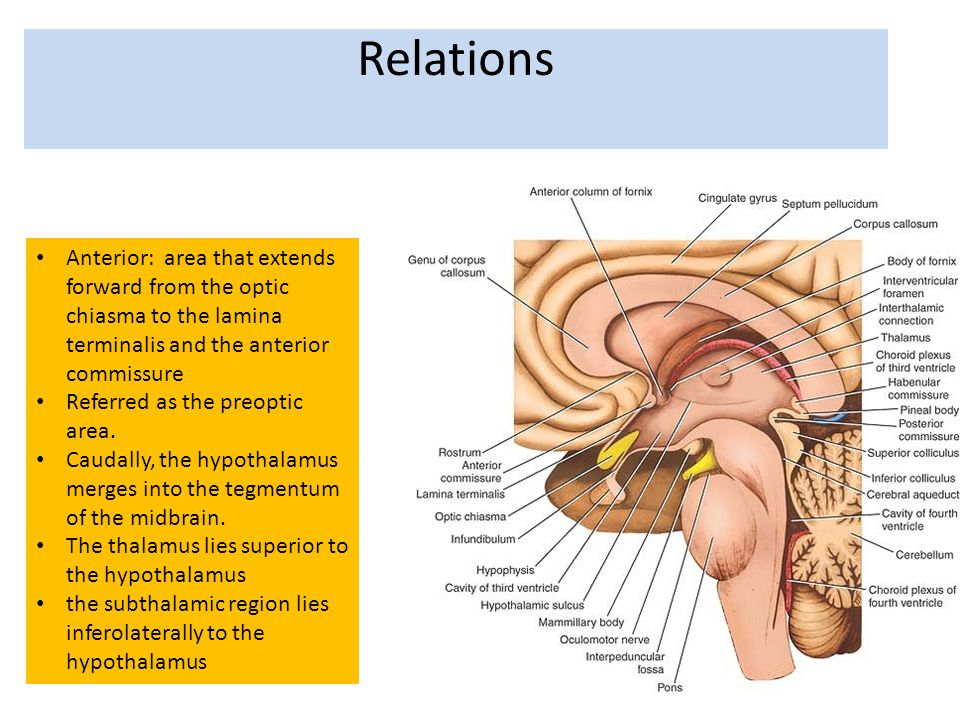 Anterior: area that extends forward from the optic chiasma to the lamina terminalis and the anterior commissure Referred as the preoptic area. Caudall