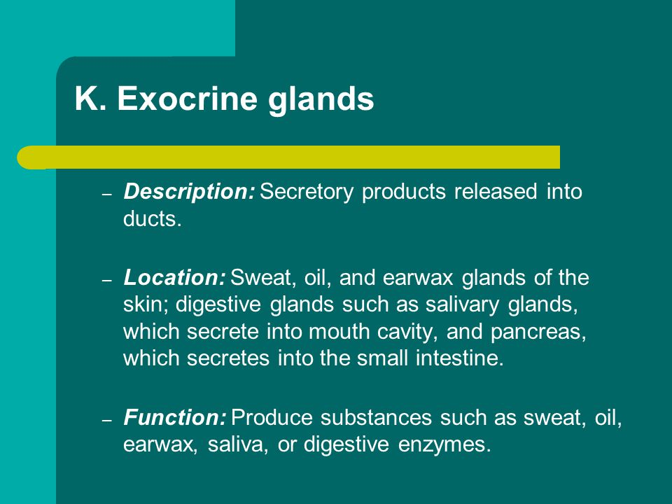 K. Exocrine glands – Description: Secretory products released into ducts. – Location: Sweat, oil, and earwax glands of the skin; digestive glands such