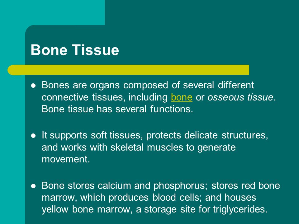 Bone Tissue Bones are organs composed of several different connective tissues, including bone or osseous tissue. Bone tissue has several functions. bo