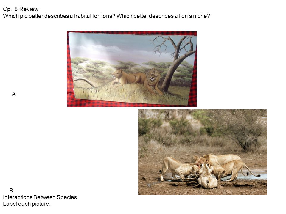 Cp. 8 Review Which pic better describes a habitat for lions.