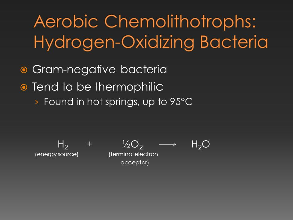  Gram-negative bacteria  Tend to be thermophili c › Found in hot springs, up to 95°C H 2 + ½O 2 H 2 O (energy source) (terminal electron acceptor)