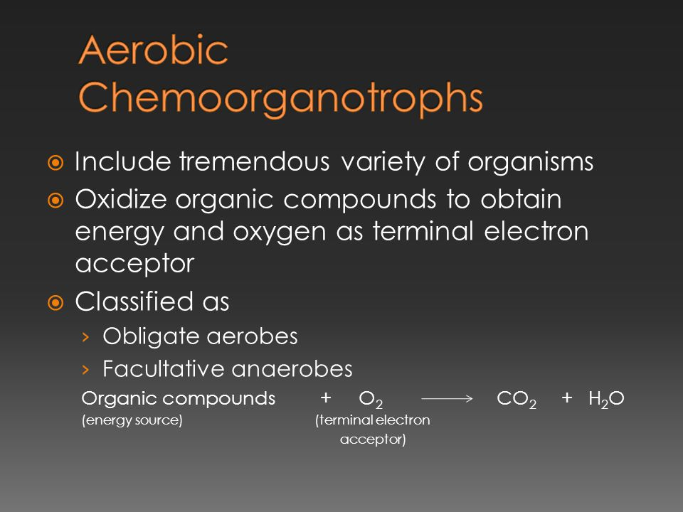  Include tremendous variety of organisms  Oxidize organic compounds to obtain energy and oxygen as terminal electron acceptor  Classified as › Obli