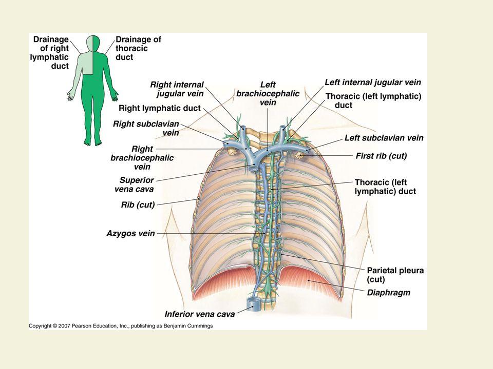 Organs involved