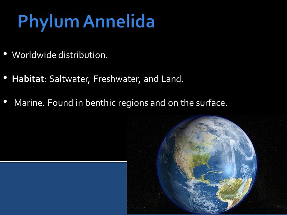 Worldwide distribution. Habitat: Saltwater, Freshwater, and Land. Marine. Found in benthic regions and on the surface.