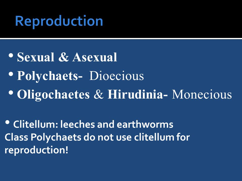 Sexual & Asexual Polychaets- Dioecious Oligochaetes & Hirudinia- Monecious Clitellum: leeches and earthworms Class Polychaets do not use clitellum for