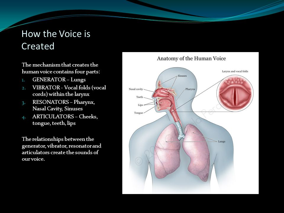 How the Voice is Created The mechanism that creates the human voice contains four parts: 1. GENERATOR – Lungs 2. VIBRATOR - Vocal folds (vocal cords)