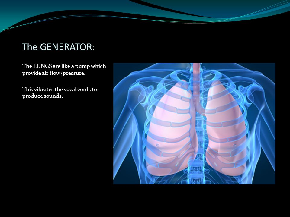 The GENERATOR: The LUNGS are like a pump which provide air flow/pressure. This vibrates the vocal cords to produce sounds.