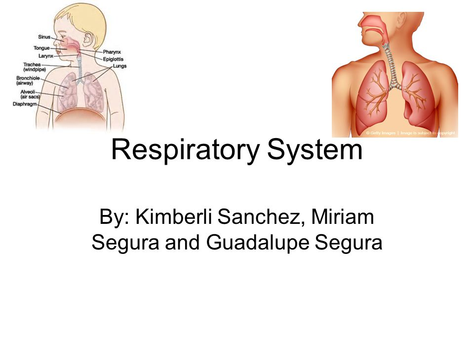 Major Functions The main function of the respiratory system is the exchange of gases such as oxygen and carbon dioxide in the lungs.