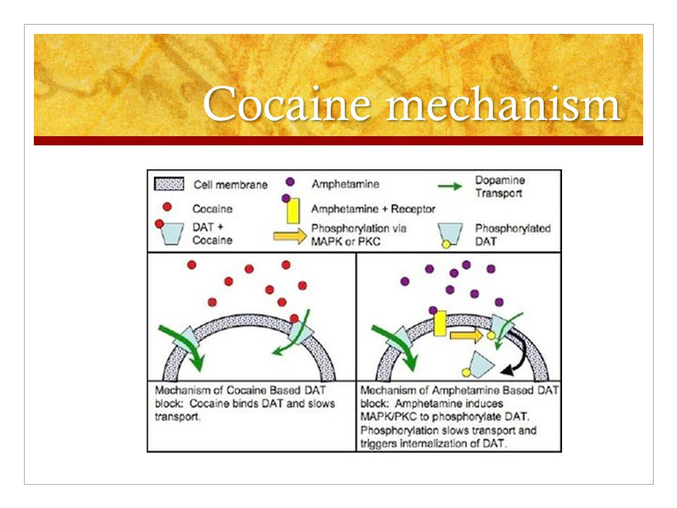 Cocaine mechanism