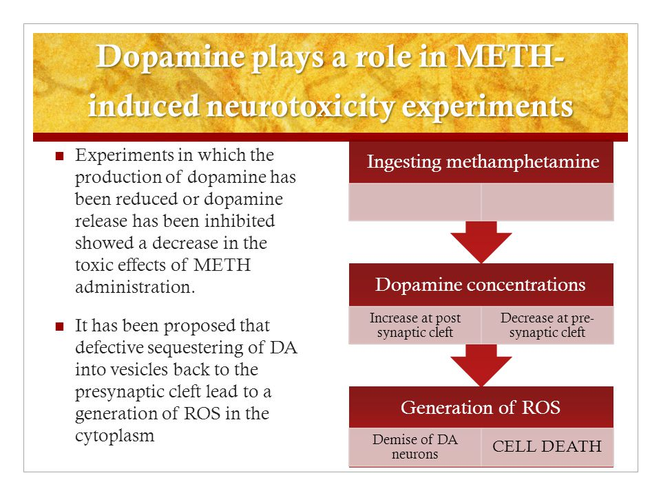 Dopamine plays a role in METH- induced neurotoxicity experiments Experiments in which the production of dopamine has been reduced or dopamine release