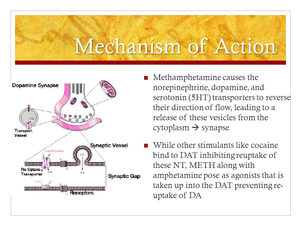Mechanism of Action Methamphetamine causes the norepinephrine, dopamine, and serotonin (5HT) transporters to reverse their direction of flow, leading