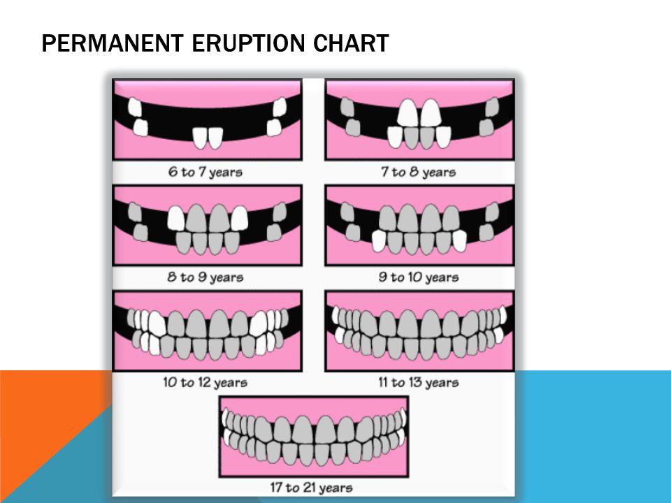 PERMANENT ERUPTION CHART