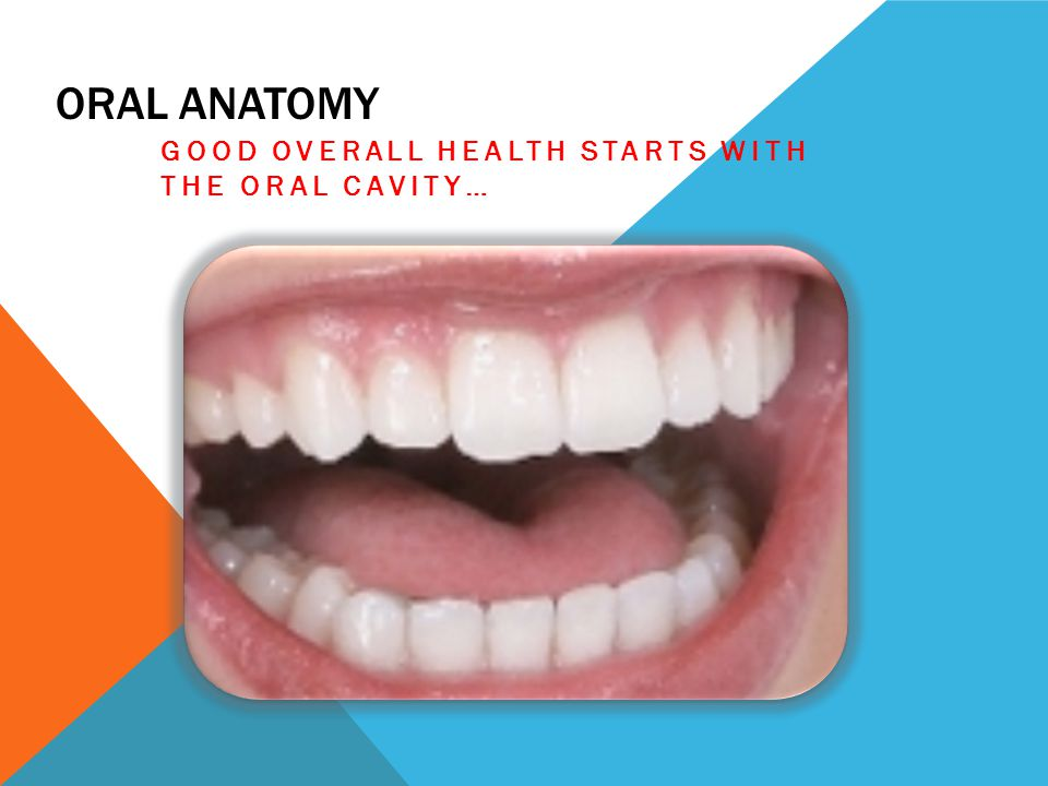 ORAL ANATOMY GOOD OVERALL HEALTH STARTS WITH THE ORAL CAVITY…
