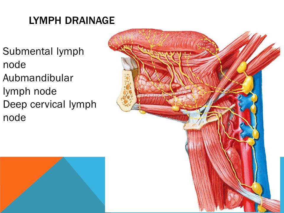 LYMPH DRAINAGE Submental lymph node Aubmandibular lymph node Deep cervical lymph node