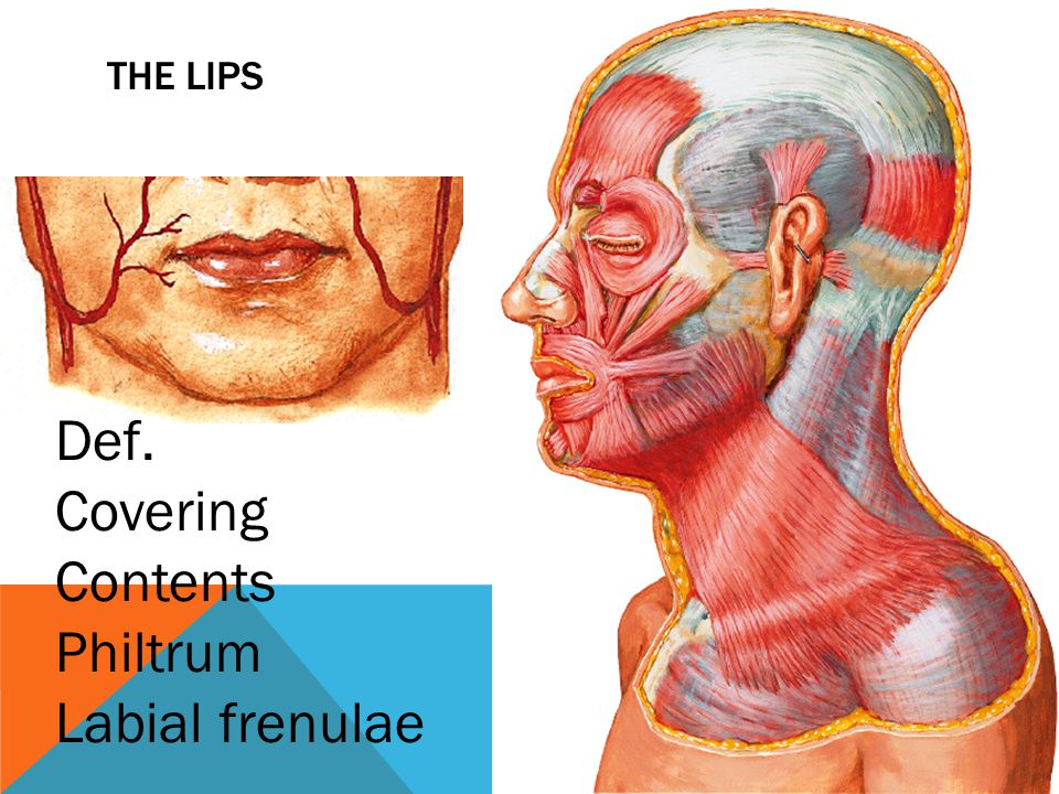 SUBLINGUAL SALIVARY GLANGS Is the smallest of the three main salivary glands It has both serous and mucous acini Site: related to sublingual fossa of mandibular under cover of mucous membrane of the mouth (sublingual fold) Ducts: open into the floor of the mouse (8- 20)