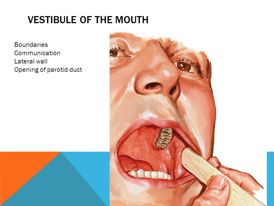 VESTIBULE OF THE MOUTH Boundaries Communication Lateral wall Opening of parotid duct