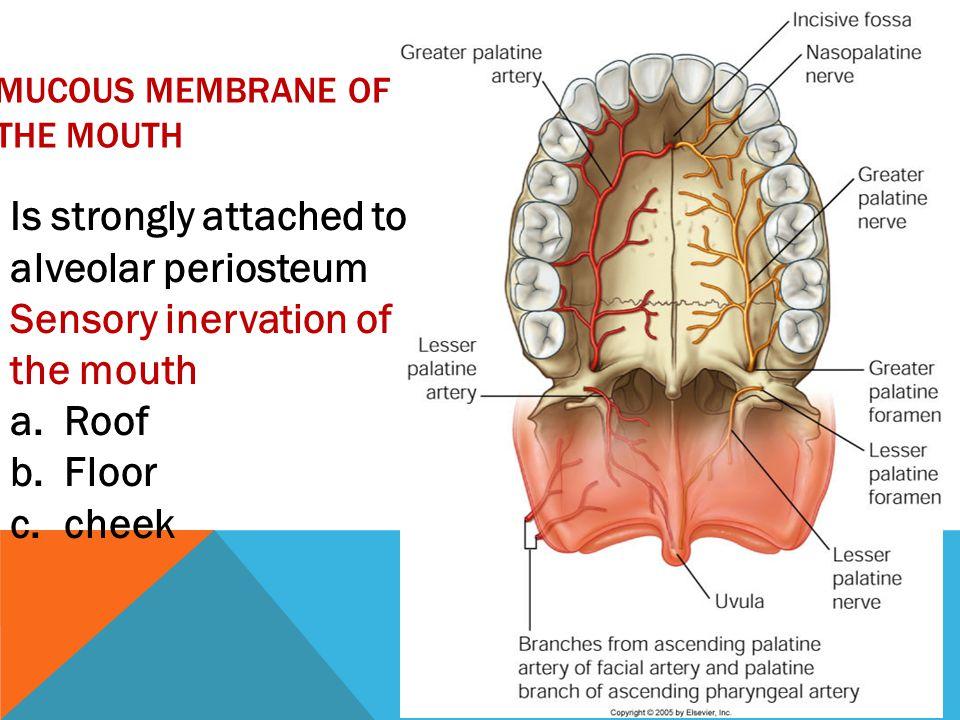 NERVES OF THE GLAND Parasympathetic (secretomotor): The preganglionic fs.