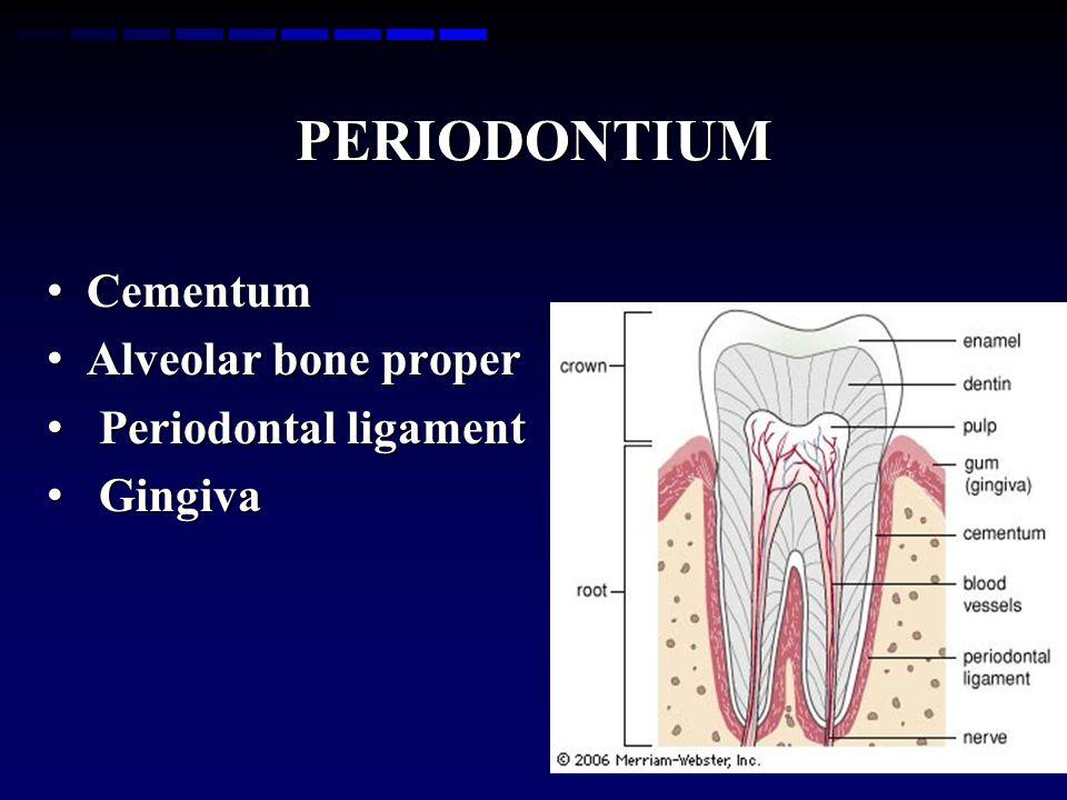 PERIODONTIUM Cementum Cementum Alveolar bone proper Alveolar bone proper Periodontal ligament Periodontal ligament Gingiva Gingiva