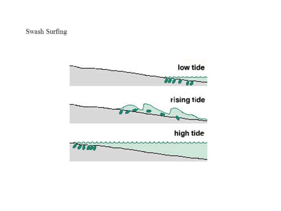 Swash Surfing