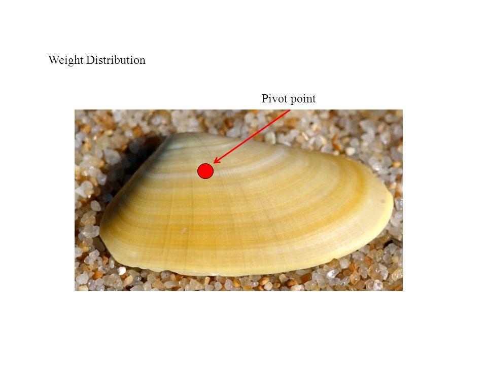 Weight Distribution Pivot point