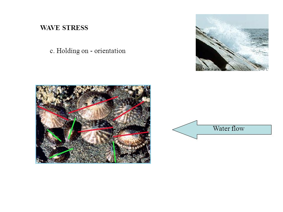 WAVE STRESS c. Holding on - orientation Water flow